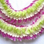 3 color orchid lei