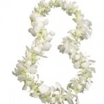 Single white orchid lei